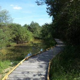 Nouveau à l'étang du Breuillez