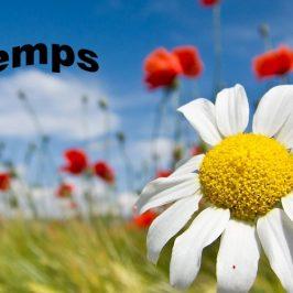 Préparez le printemps en aménageant votre jardin avec nous